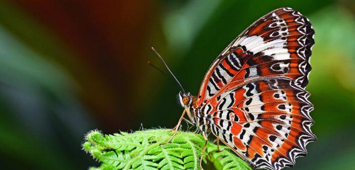 Biodiversité : les entreprises ont un rôle clé à jouer